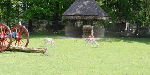 Kinderboerderij de Kienehoeve in Streekpark de Kienehoef