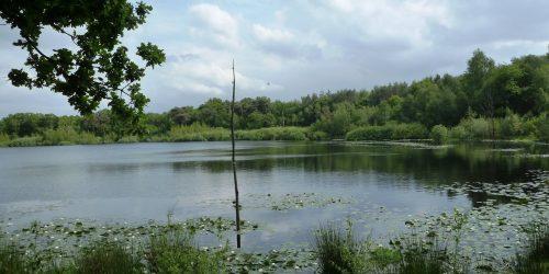 Wonderschone natuur, De Hazenputten in Het Vresselse Bos, Sint-Oedenrode