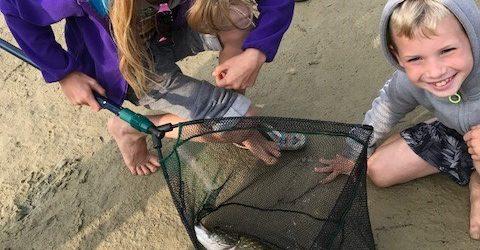 Vissen bij het recreatiemeer